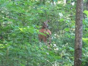 Mom Deer!